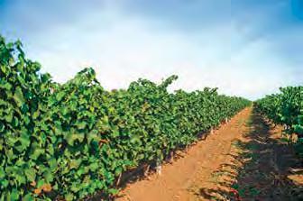 Кадастр виноградников Украины. Реалии и перспективы