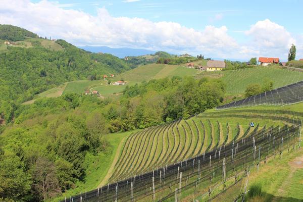 Винный саммит-2017: винная мировая элита посещает Австрию