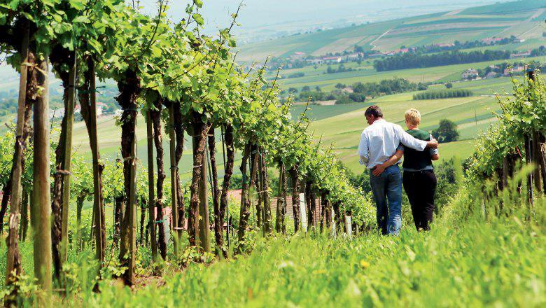 Новий виноробний регіон Австрії: Schilcherland DAC
