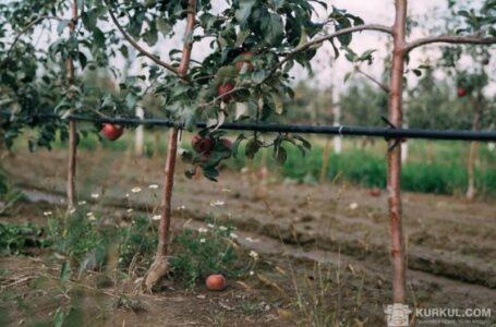Попит на саджанці яблук і малини різко знизився