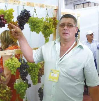 Ігор ЛОШАК: «Ринок вимагає рожевих та червоних сортів винограду»