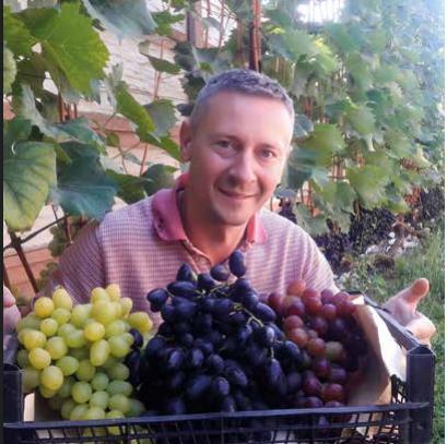 ГІД ДЛЯ ПОЧАТКІВЦІВ:  три секрети врожаю винограду Віталія Коваля
