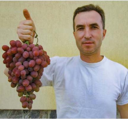 Як уникнути ризиків втрат урожаю винограду ще на етапі цвітіння