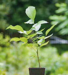 Адаптуємось до трендових змін – стаємо власниками прав на сорт рослин