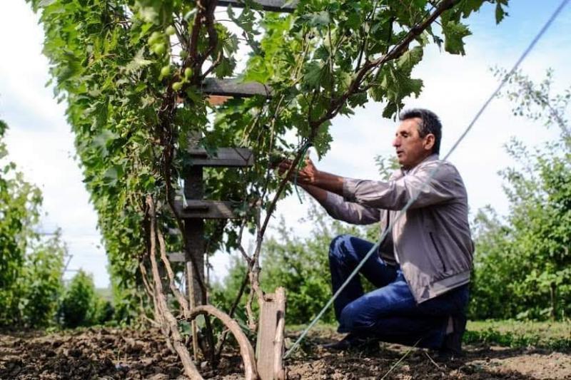 Родинна виноробня Зелениці: у виноробстві потрібно шукати своє, робити відступи від усталених правил і стереотипів
