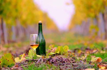 Сьогодні річниця узаконення свята виноградаря і винороба