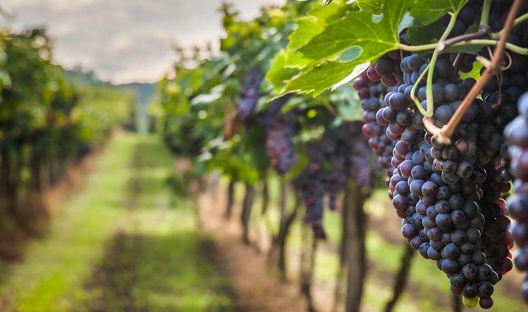 В Україні створять електронний реєстр виробників винограду та виноробної продукції